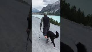 dog motivational and inspirational video || #short