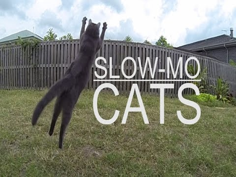 Gopro Hero3 240fps Slow motion cats test