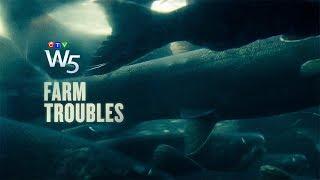 W5: Are fish farms pushing salmon towards extinction?