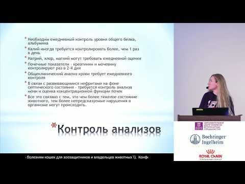 Егорова А. А. - Панлейкопения кошек