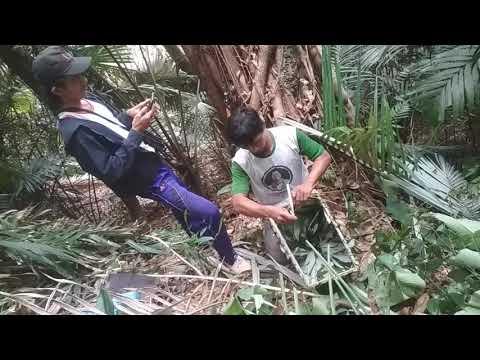 Aksi kami mengambil madu lebah liar hutan di atas pohon di gunung