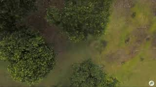 FPV FREESTYLE FLOW MAYBE