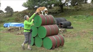 Check out our ultimate dog adventure playground- the Canine Assault Course!