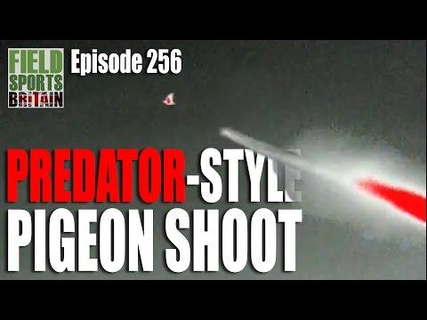 Fieldsports Britain – Predator-Style Pigeon Shoot