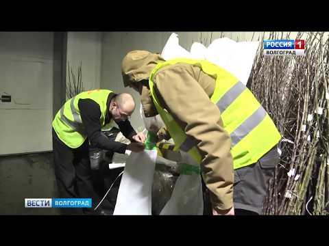 В Волгоградской области Управлением Россельхознадзора проверена крупная партия саженцев из Польши
