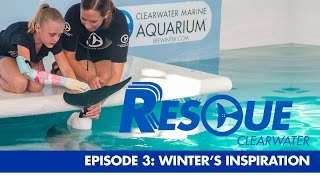 Winter's Inspiration - Rescue-Clearwater Season 1: Ep. 3