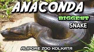 Kolkata Alipur Zoo||Alipur Chiriakhana||আলিপুর চিড়িয়াখানা|| Anaconda & Snakes of Alipur Zoo