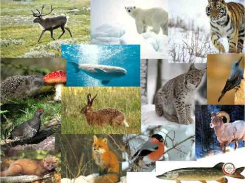 Объекты природы, подлежащие правовой охране.