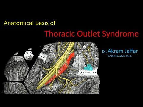 Anatomiczne podstawy zespołu górnego otworu klatki piersiowej