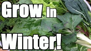 8 Keys to Growing in Winter in an Unheated Greenhouse (Hoop House)