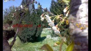 preview picture of video 'B&B Valmontone Apple Tree.wmv'