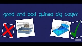 Good And Bad Guinea Pig Cages