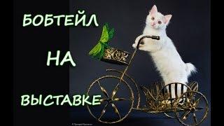 Порода КАРЕЛЬСКИЙ БОБТЕЙЛ на выставке
