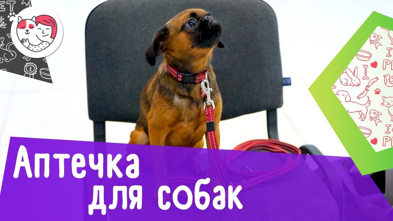 Аптечка первой помощи для собак: 8 главных элементов