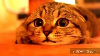 Приколы про кошек, котиков, животных 2018