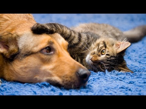 Funny Cat And Dog Videos Compilation | 15 Minutes