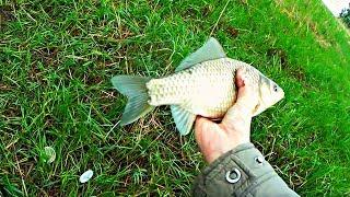 Рыбалка на карася в маю