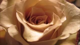 CHRISETTE MICHELE ○ SO IN LOVE