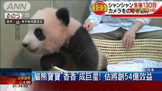 日本上野動物園超萌貓熊寶寶香香可愛亮相爬上爬下賣萌見客
