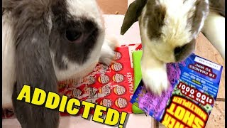 Bunny Scratches Lottery Tickets