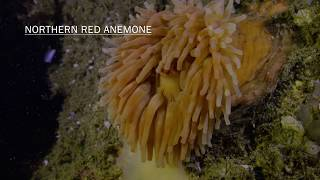 Underwater Life in Rockland, Maine