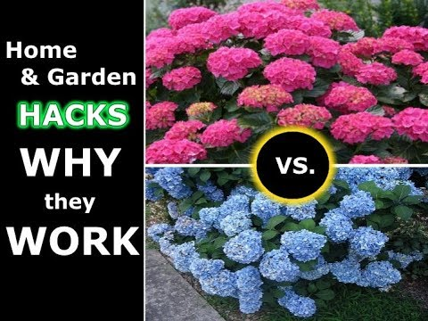 11 Useful Hacks for Your Home and Garden