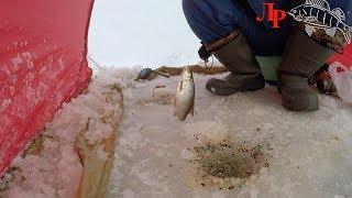 Ловля плотвы зимой на мормышку с прикормкой