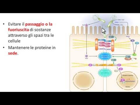 Trattamento osteocondrosi Permiano