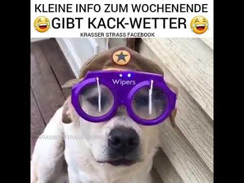 Die neue Hunde Brille jetzt kaufen