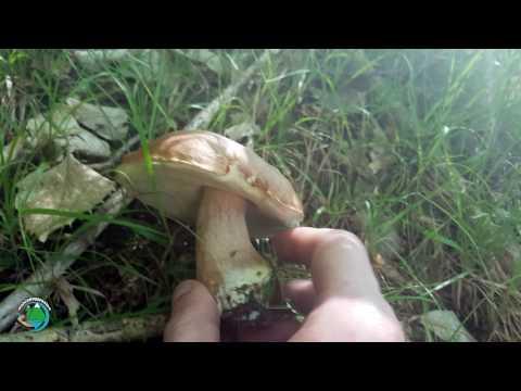 I danni di posizione di fungo
