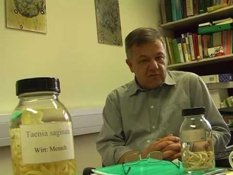 Die Präparate von den Würmern bei den Kindern nach dem Jahr
