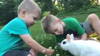 Dwarf Hotot Pet Magic Wild Kratts Rabbit Fun