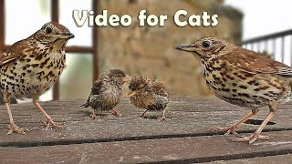 Videos for Cats and People to Watch : Song Thrush and Sparrows NEW 8 HOURS ✅