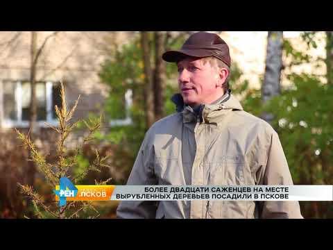 Новости Псков 23.10.2017 # Новые деревья появились в сквере на Кошевого