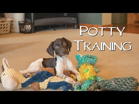 Potty Training - Potty Training Your New Puppy
