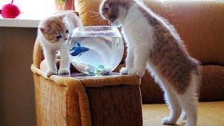 Смешные коты, кошки и другие животные (funny cats 2019) – НЕ РАЗРЕШАЕТСЯ ГРУСТИТЬ, КЛАССНЫЕ КОТЕНКИ