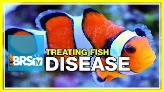 Week 51: What you need to know to cure fish disease & parasites | 52 Weeks of Reefing #BRS160
