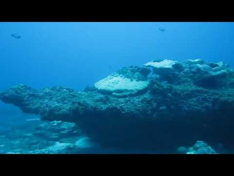 Scuba diving at Third Reef Negombo with Taprobane Divers!