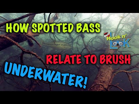 How Spotted Bass Relate to Brush