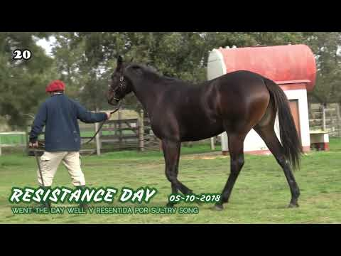 Lote RESISTANCE DAY