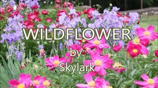 WILDFLOWER By Skylark(created By:Zairah)