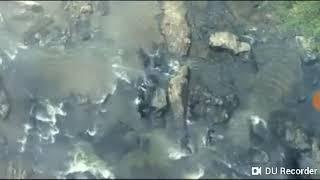 rampage wolf fight full movie in hindi hd 1080p - Kênh video
