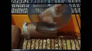 hamster oyun evi