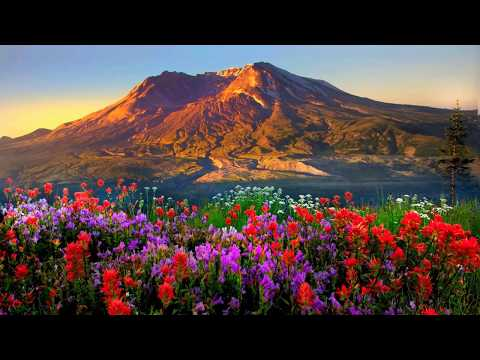 Mountains flowers (HD1080p)