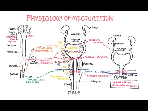 Kineziterapiya di reparto cervicale di una spina dorsale di esercizio