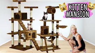 BUILDING MY KITTENS THEIR DREAM HOUSE!! (AWESOME) | NICOLE SKYES