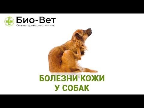 Болезни Кожи у Собак - Симптомы и Лечение // Сеть Ветклиник БИО-ВЕТ