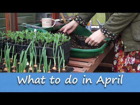 Jobs to do in the Allotment Garden - April