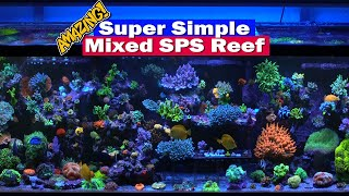 Super Simple Reef tank - Tank tour of Wincey's packed mixed SPS 210G Saltwater Reef Aquarium