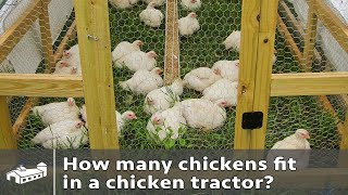 How Many Chickens Per Chicken Tractor?